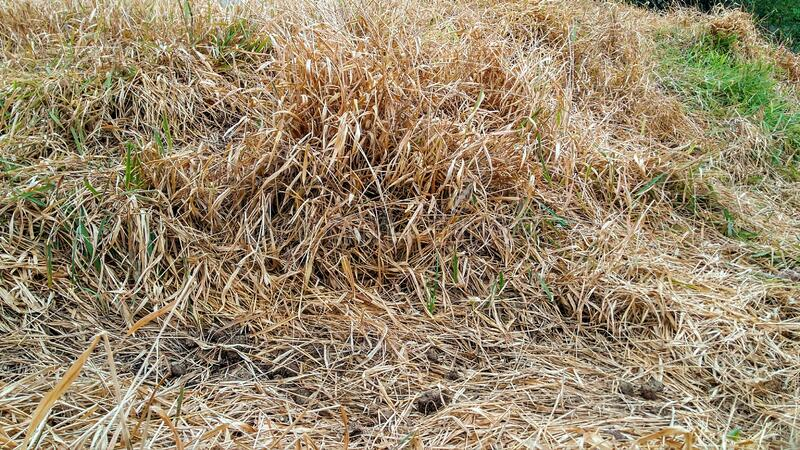 Poisoned dead grass royalty free stock image