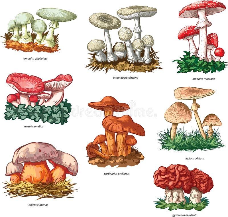 Poisonous mushrooms stock illustration