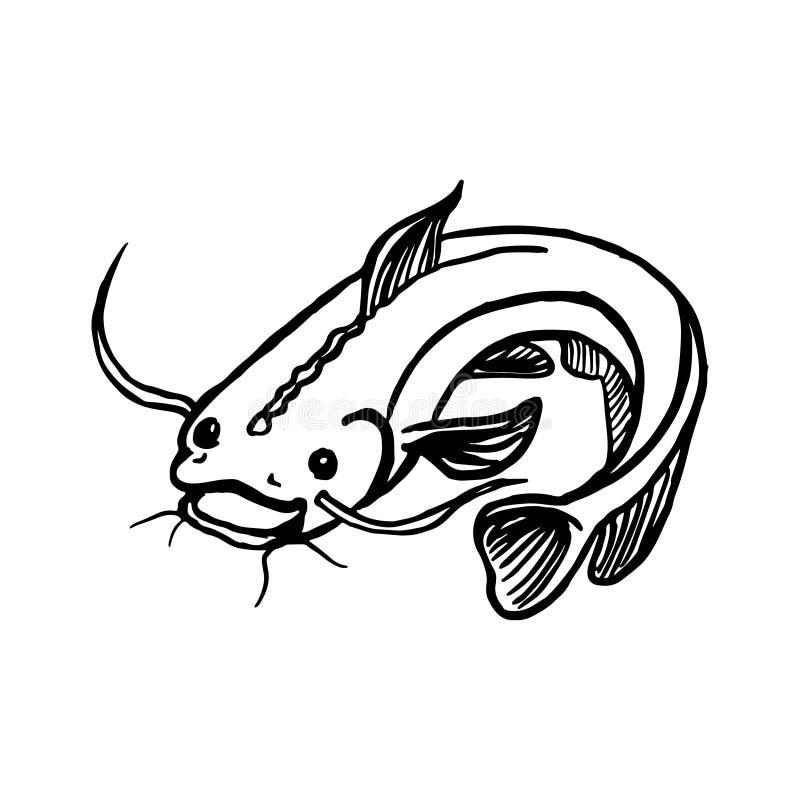 Poisson-chat de croquis d'isolement par silures, poissons prédateurs d'eau douce avec des barbeaux et queue incurvée illustration libre de droits