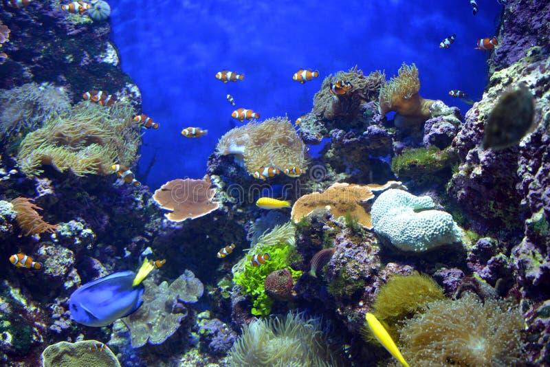 Poisson de mer images stock