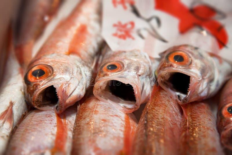 Poisson frais au marché de Tsukiji photos libres de droits