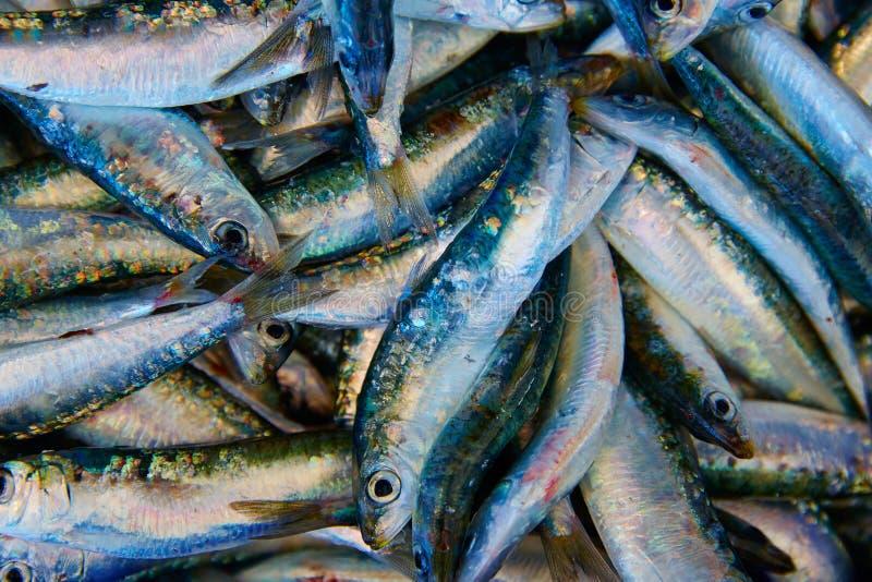 Poisson frais de sardines sur la poissonnerie image stock