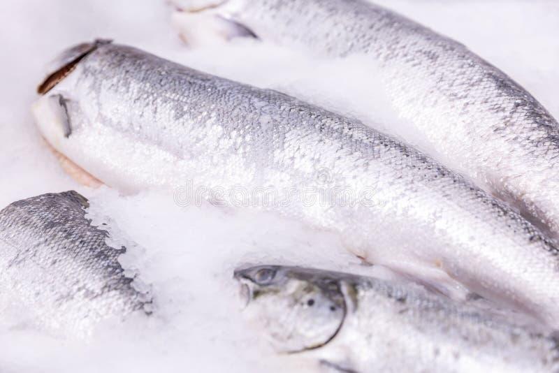Poisson frais effrayant cru sur la glace dans le supermarché Plan rapproch? Fond L'espace pour le texte photographie stock libre de droits