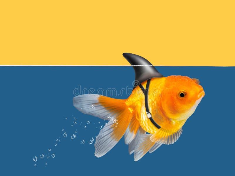 Poisson rouge avec la natation d'aileron de requin à l'eau et à l'arrière-plan jaune de ciel, poisson d'or, poissons décoratifs d images libres de droits