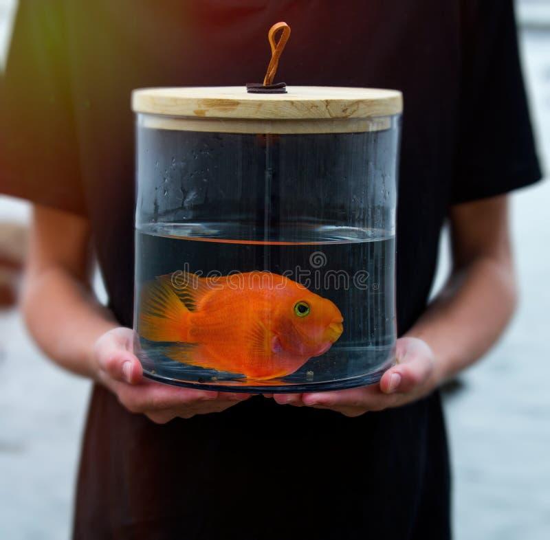 Poisson rouge dans un pot en verre sur le bord de la mer entouré par des coquilles a photographie stock