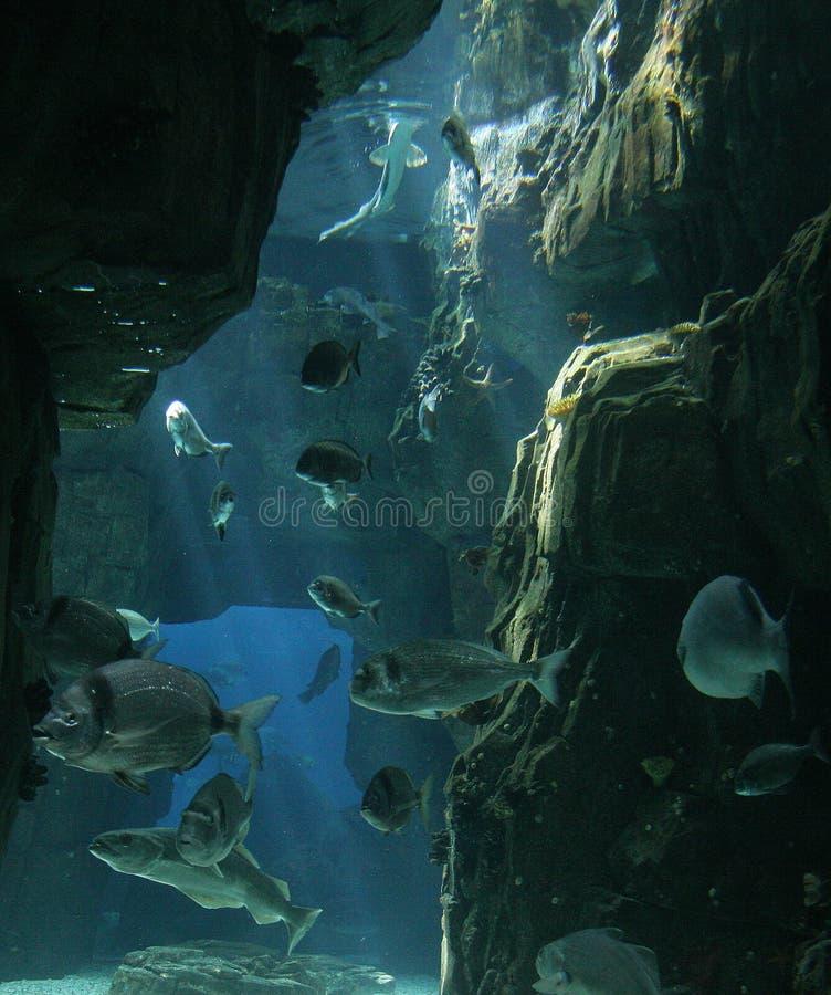 Poissons à Lisbonne Oceanarium image stock