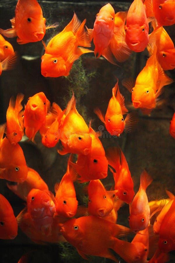 poissons image stock