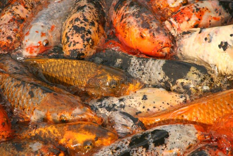 poissons image libre de droits