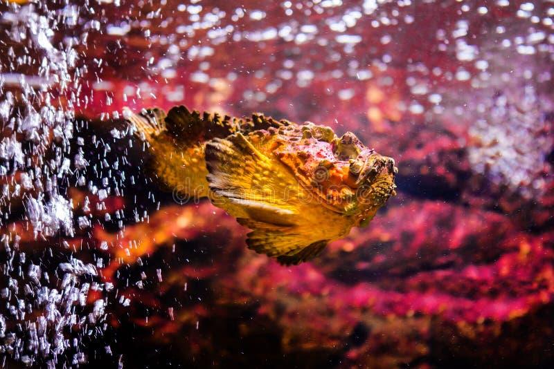 poissons avec les animaux de corail et aquatiques images stock