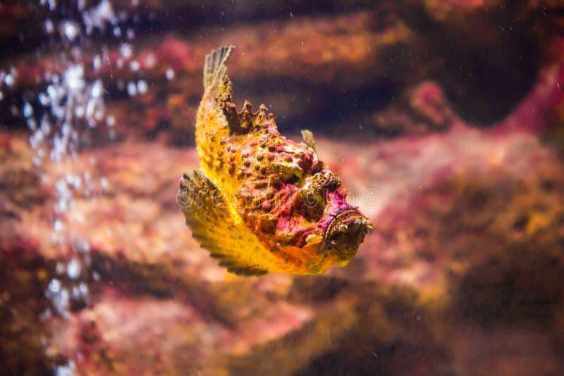 poissons avec les animaux de corail et aquatiques photos libres de droits