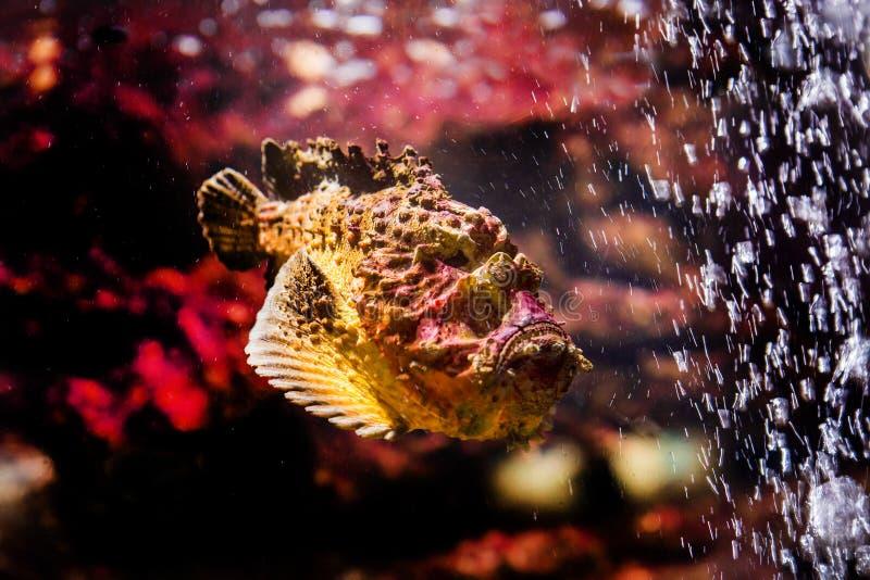 poissons avec les animaux de corail et aquatiques photo libre de droits