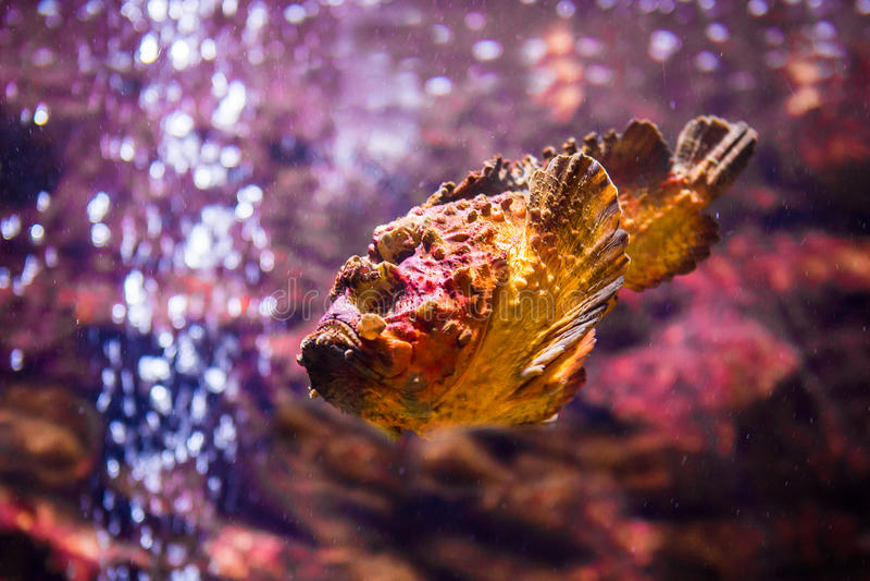 poissons avec les animaux de corail et aquatiques photographie stock libre de droits