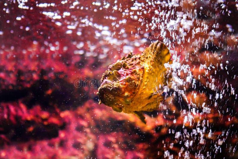 poissons avec les animaux de corail et aquatiques image stock