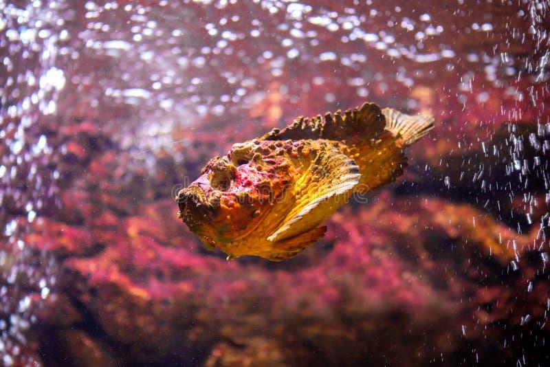 poissons avec les animaux de corail et aquatiques images libres de droits