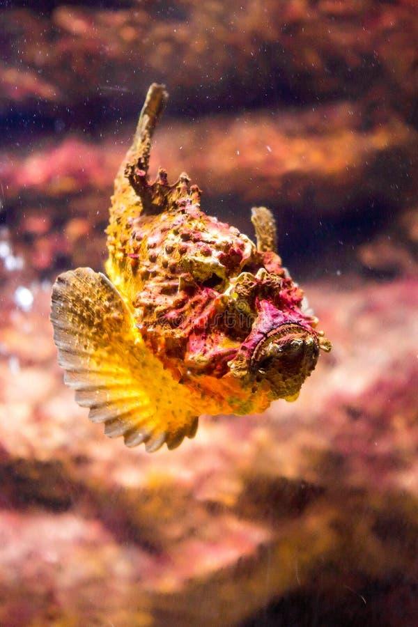 poissons avec les animaux de corail et aquatiques photos stock