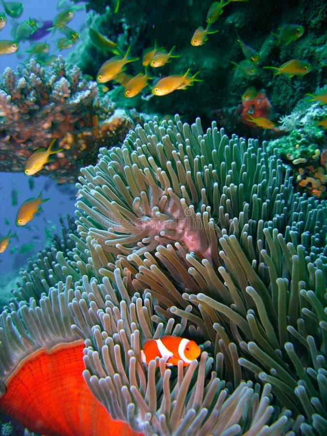 Poissons colorés de récif coralien