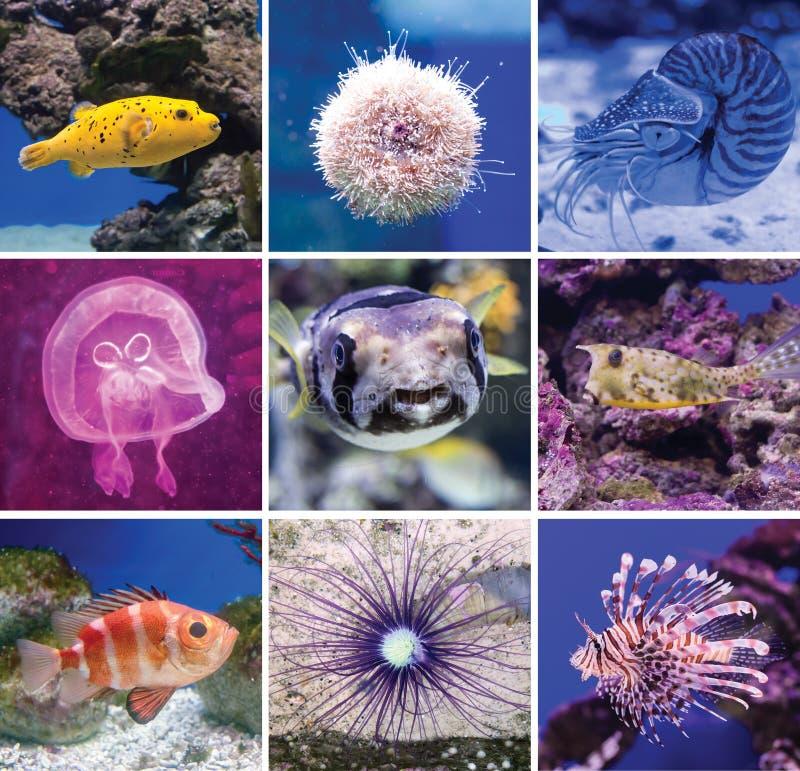 Poissons colorés en monde d'eau de mer d'aquarium photos stock
