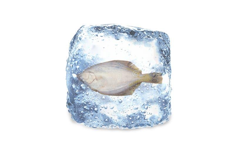 Poissons congelés, glace photos libres de droits