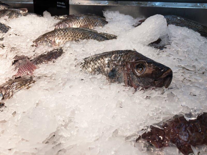 Poissons congel?s dans le supermarch? images libres de droits