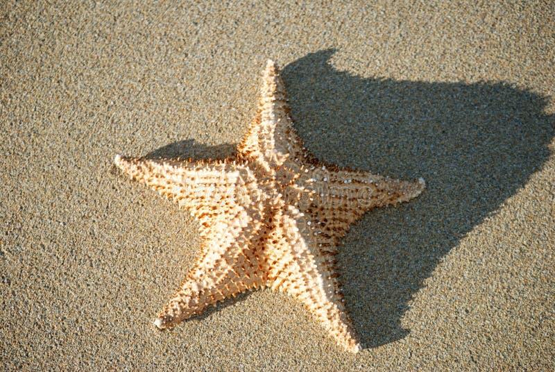 Poissons d'étoile images stock