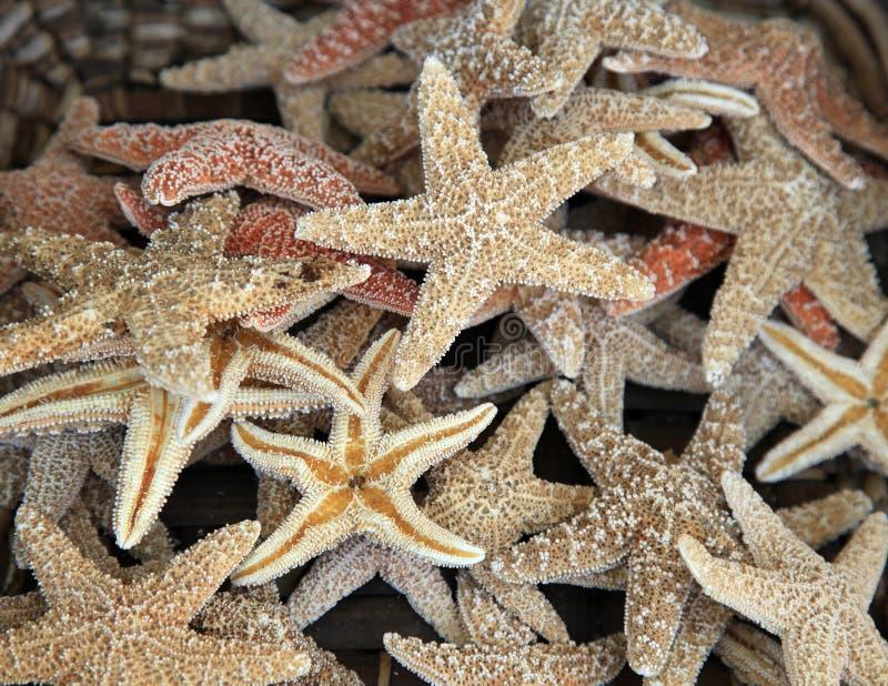 Poissons d'étoile photo libre de droits