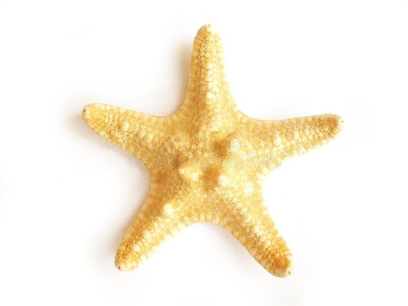 Poissons d'étoile photos stock