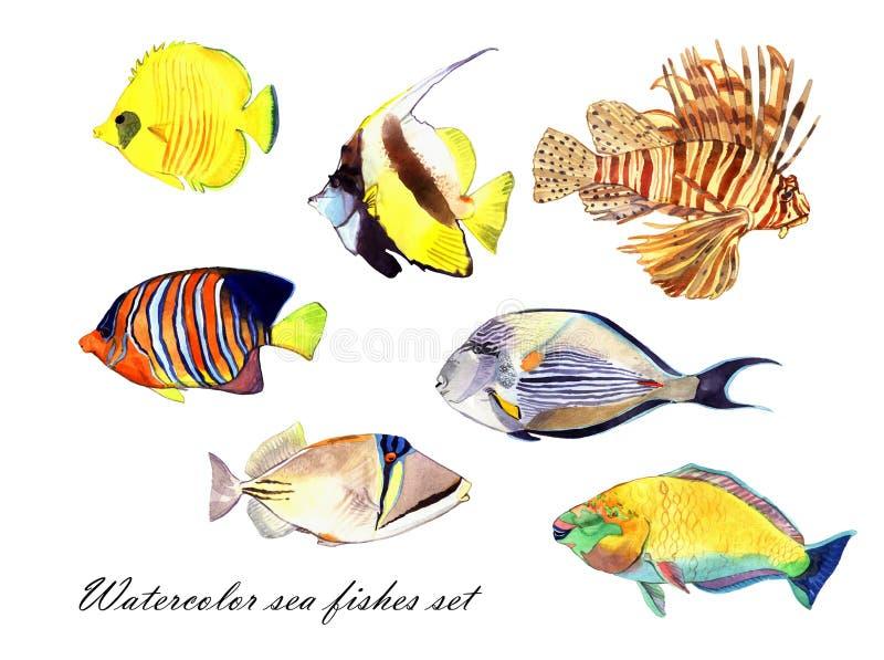 Poissons d'aquarelle Illustration réglée de poisson de mer photo stock