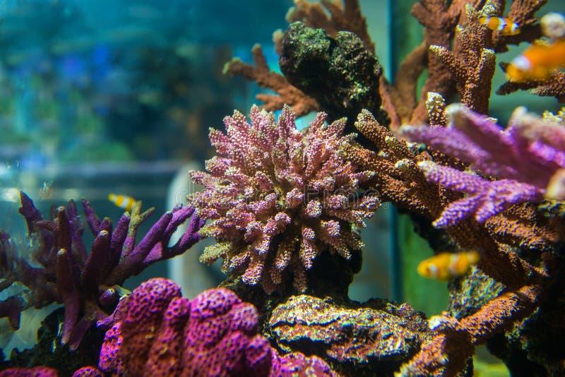 Poissons d'aquarium avec les animaux de corail et aquatiques images libres de droits