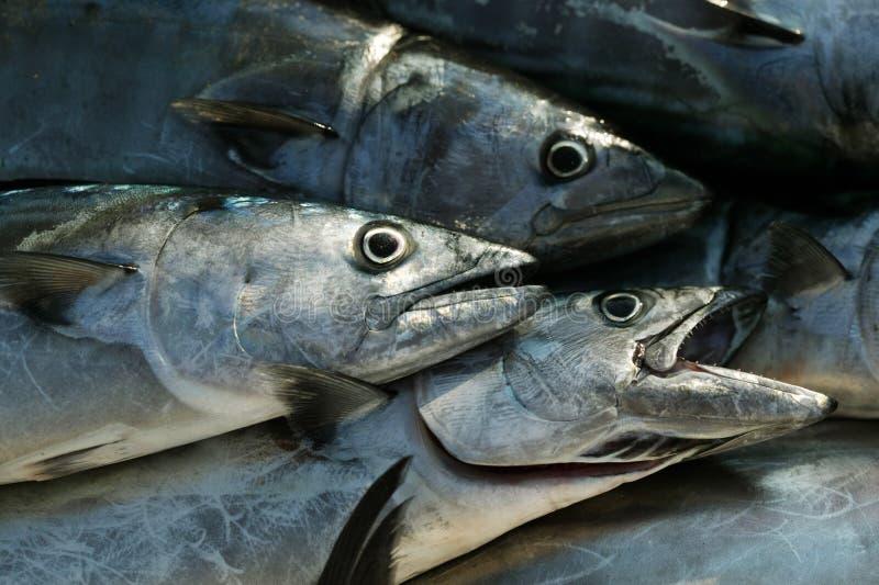 Poissons d'eau de mer photographie stock libre de droits