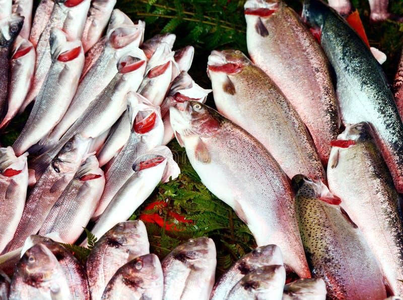 Poissons d'eau de mer frais photographie stock libre de droits