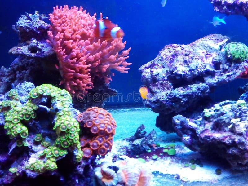 Poissons dans l'aquarium photos stock
