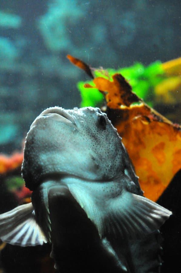 Poissons dans l'aquarium photographie stock