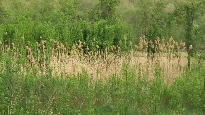 Poissons dans la forêt photos stock