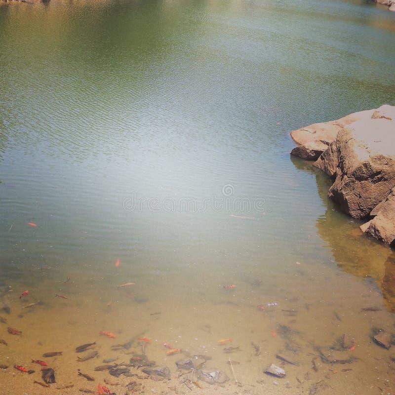 Poissons dans le lac ! images libres de droits
