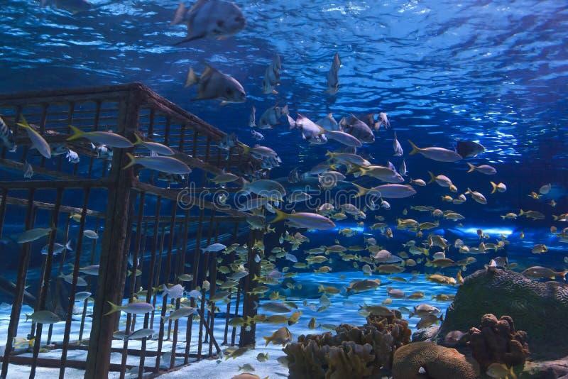Poissons dans un aquarium photo stock
