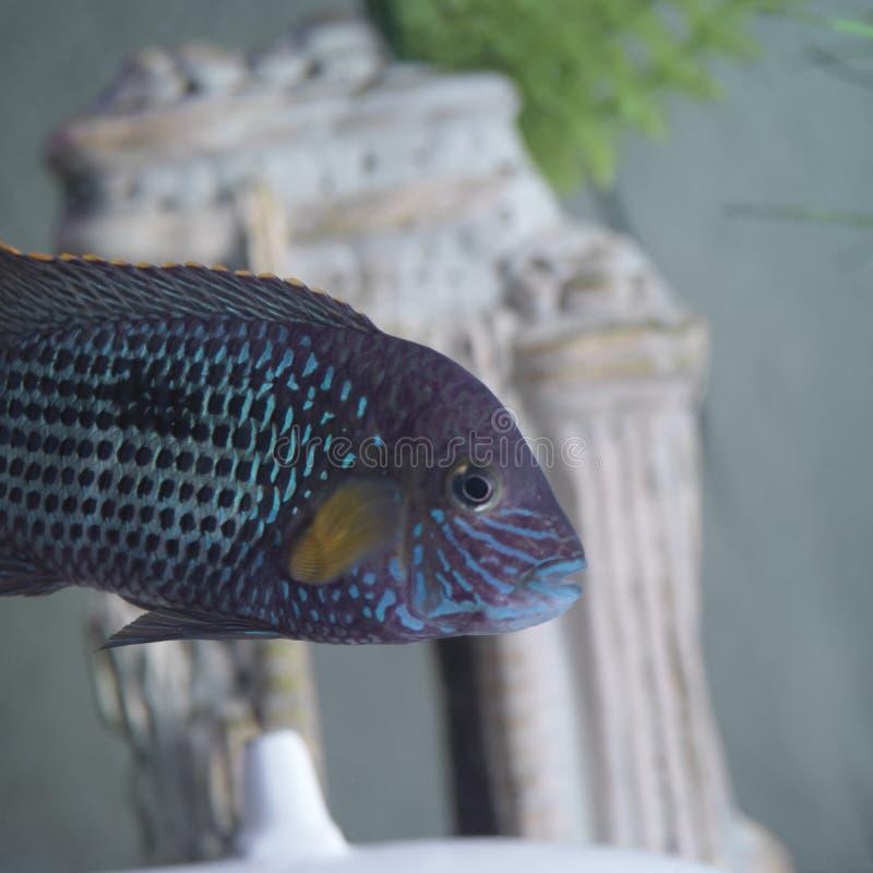 Poissons dans un bocal à poissons photographie stock libre de droits