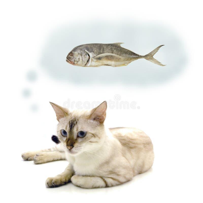 poissons de chat photo stock
