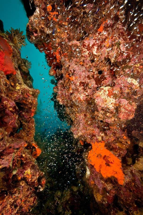 poissons de corail photographie stock