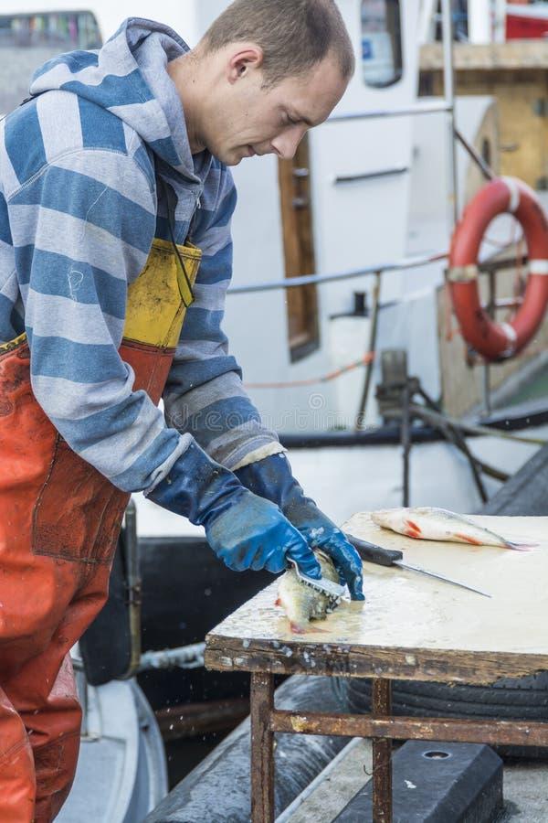 Poissons de détartrage de pêcheur photographie stock libre de droits