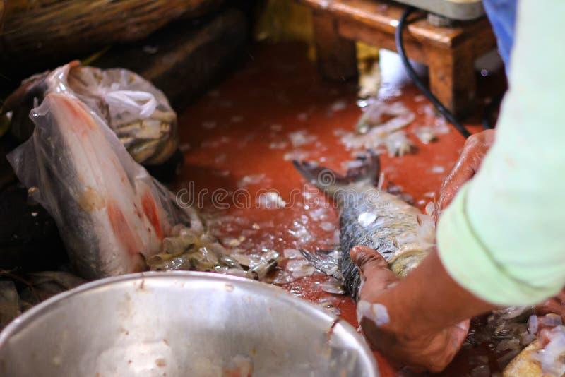 Poissons de détartrage de pêcheur à vendre photographie stock