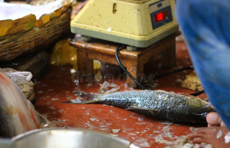Poissons de détartrage de pêcheur à vendre photos libres de droits