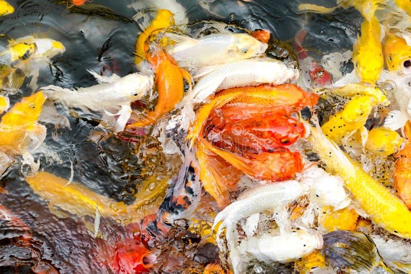 Download Poissons De Koi Dans L'étang, Fond Naturel Coloré, Couleur Fanée Photo stock - Image du orange, hippie: 76082926