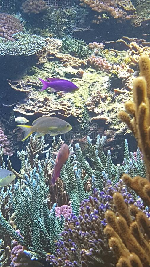 Poissons de mer photos stock