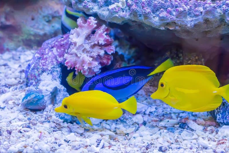 Poissons de mer photographie stock