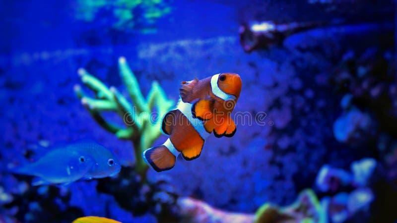 Poissons de mer dans l'aquarium marin images libres de droits