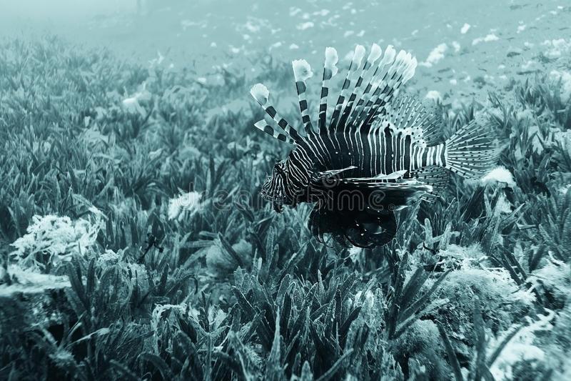 Poissons de mer sur un récif coralien images stock