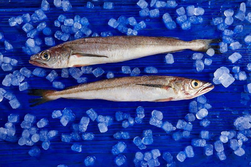 Poissons de merluches sur la vue de côté de glace photo stock