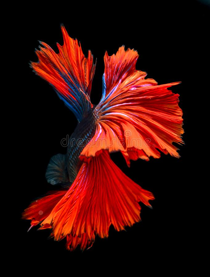 Poissons de morsure avec de belles couleurs photo libre de droits