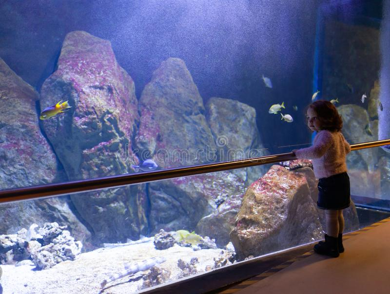 Poissons de observation de petite fille dans un grand aquarium image libre de droits