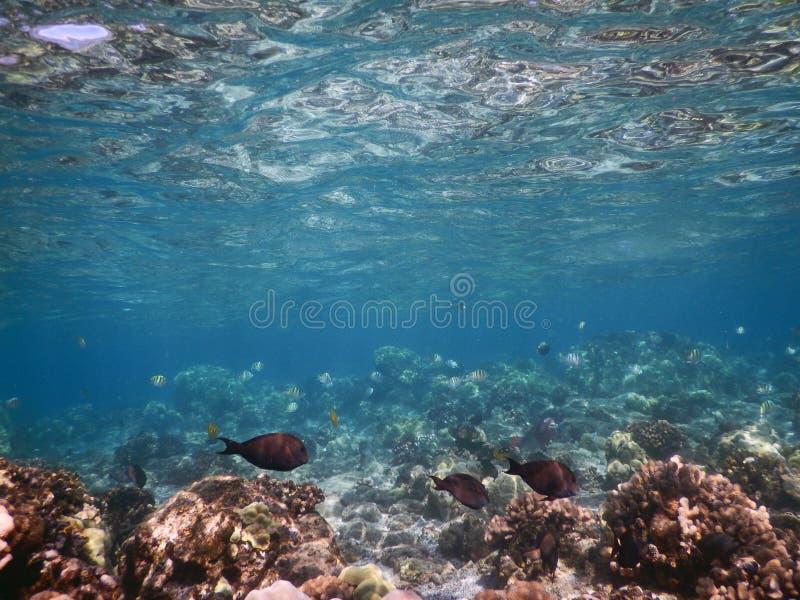 Poissons de récif image libre de droits